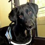 Le flair du chien est d'une grande précision et fiabilité !