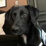 Le chien renifleur de punaises de lit vous assure un service plus rapide