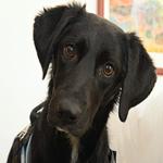 La détection canine une solution économique