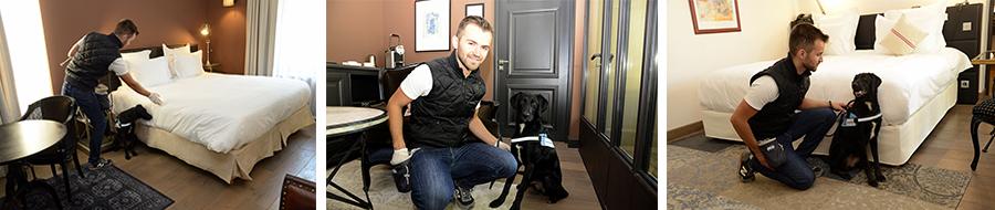 Service de détection préventive canine contre les Punaises de Lit
